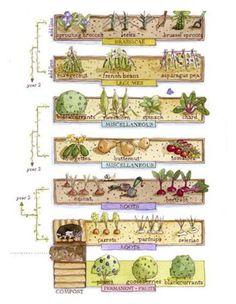 7 suggerimenti per avviare un orto biologico | Guida Giardino