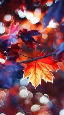 ~Autumn Sparkle~