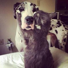 These two lovebugs start off their day RIGHT, with kisses and hugs. | 21 Cuddly Cat And Dog Best Friends To Make You Squee