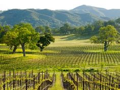 Experience Spring Wildflower Tours with Ancient Peaks Winery in Santa Margarita.