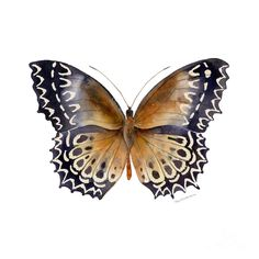 77 Cethosia Butterfly Painting by Amy Kirkpatrick