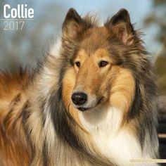 Avonside Hunde-Kalender 2017Avonside Hunde Wandkalender 2017: Collie
