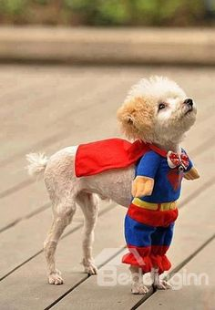 Super Cute Dog Superman costume Dog Clothing....I may have to do this with Pinky this year
