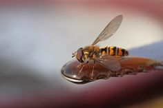 Slight one. by Pierre Anex on Insects, Bee, Abstract, Animals, Summary, Animales, Animaux, Bees, Animal Memes