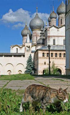 Rostov Cat