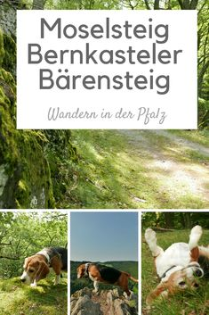 My first affair: Moselsteig Bernkasteler Bärensteig – Famous Last Words Reisen In Europa, Pacific Crest Trail, Colorado Hiking, Appalachian Trail, Famous Last Words, Beautiful Islands, Hiking Trails, Outdoor Travel, In The Heights