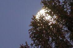 Kuusk / minestretked Moon, The Moon