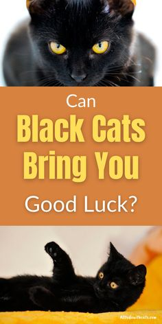 Why are black cats lucky and what are the myths surrounding them? Discover fun and interesting facts about black cats and see if you'd like to invite one into your life! #blackcatsgoodluck #luckyblackcat #blackcat #blackcatmyths #catfacts