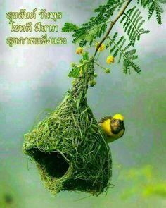 Good Day, Good Morning, Wednesday, Birds, Pets, Flowers, Animals, Nice, Buen Dia