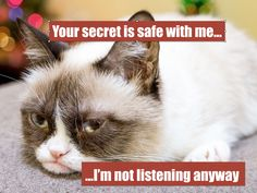 """Times when you told someone a secret and they revealed it (on purpose or by accident. Things you enjoy listening to. Write a quick imaginative """"character"""" description of Grumpy Cat. Grumpy Cat, Character Description, Cat Stuff, Cat Memes, English Language, Purpose, Internet, Times, Writing"""