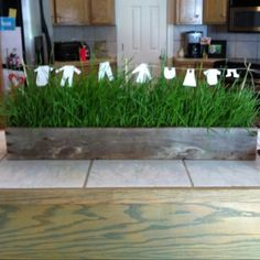 Wheat grass box with clothesline Wheat Grass, Clothes Line, Baby Boy Shower, Hardwood Floors, Diy Projects, Entertaining, Canning, Deco, Spring