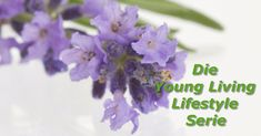 natürliche Reiniger Die Young, Young Living, Plants, Natural Cleaners, Natural Cleaning Products, Cleaning, Nature, Planters, Plant