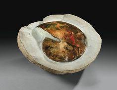 Ammonite iridescente Sphenodiscus sp. haut crétacé (environ 65 millions d'années), sud Dakota U.S.A.   Lot   Sotheby's