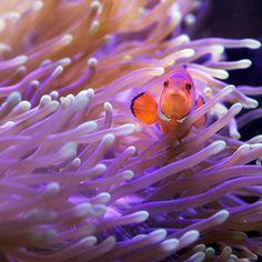 Nemo is watching you by John Hodgkin