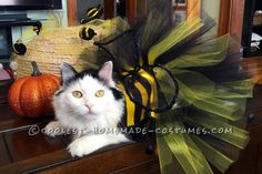 Who wants to help me win by voting and sharing? Homemade Bumble Bee Cat Costume... Coolest Halloween Costume Contest