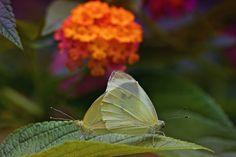 """Butterflys - <a title=""""https://www.facebook.com/RicardoAlvesPhotography"""" href=""""https://www.facebook.com/RicardoAlvesPhotography"""">https://www.facebook.com/RicardoAlvesPhotography</a>"""
