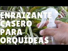 ¿Qué necesita una orquídea para poder florecer? Orquiplanet - YouTube Bonsai, Orchid Care, Begonia, Indoor Garden, Garden Projects, Youtube, Orchids, Herbs, Personal Care