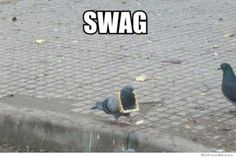 swag pigeon