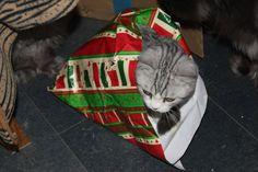 Dann pack ich mich eben in Geschenkpapier, das ist wenigstens schön bunt! Frohe Weihnachten!