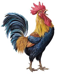 Stuart McLachlan is represented by The Jacky Winter Group - Please contact info - Rooster Painting, Rooster Art, Chicken Painting, Chicken Art, Hahn Tattoo, Arte Do Galo, Rooster Tattoo, Chicken Pictures, Farm Art
