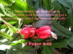 <3 <3  2 Peter 3:13 (NKJV) 13 Nevertheless we, according to His promise, look for new heavens and a new earth in which righteousness dwells. 2 Peter 3, New Earth, Righteousness, Heavens, Scriptures, Faith, Loyalty, Believe, Religion