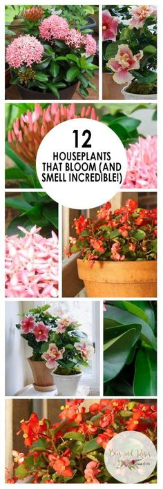 12 Houseplants That Bloom And Smell Incredible Houseplants That Bloom Low Maintenance House Plants Easy to Grow Houseplants Pretty Houseplants Indoor Gardening Indoor Ga. Indoor Vegetable Gardening, Garden Plants, Indoor Plants, Organic Gardening, Terrace Garden, Flowering House Plants, Veggie Gardens, Indoor Flowers, Urban Gardening