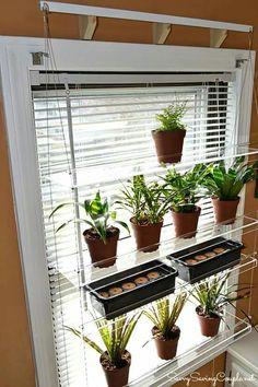 With Link To Buy In Window Hanging Plant Hanger. Duplicate Itdea | Herbs |  Pinterest | Window, Plants And Link