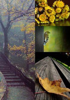 Golden & Green [Friday Flickr Photo Collage] | Flickr - Photo Sharing!
