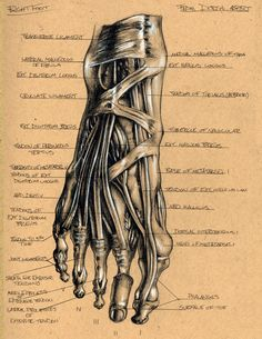 Foot Anatomy 2 by Brett Golliff