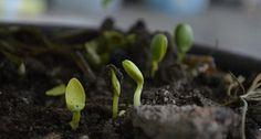 Jak podnieść żyzność gleby w ogrodzie?