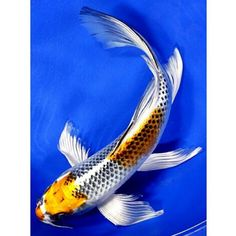 «I wan this one #gold #metalic #butterfly #koi»
