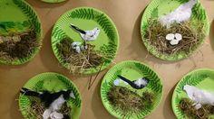 Lintu kertakäyttö lautaset kertis Spring Projects, Spring Crafts, Art School, Felting, Art Lessons, Montessori, Fathers Day, Spring Summer, Birds