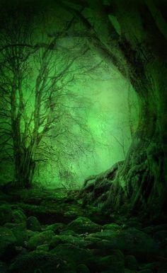 Emerald, The Enchanted Wood༻神*TZn*神༺