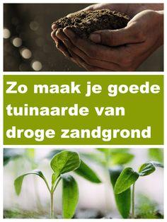 Vegetable Garden, Garden Landscaping, Gardening Tips, Herbs, Vegetables, Front Yard Landscaping, Vegetables Garden, Herb, Vegetable Recipes