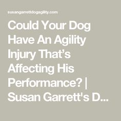 Could Your Dog Have An Agility Injury That's Affecting His Performance? | Susan Garrett's Dog Training Blog
