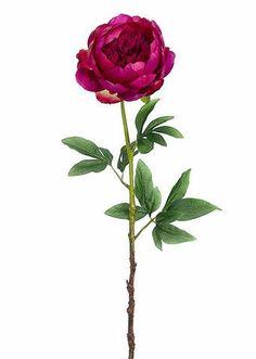 """Peony Silk Flower in Rubrum Pink 5.5"""" Bloom x 24"""" Tall"""