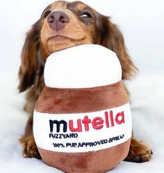 I can't think of a better Sunday plan than a full jar of Mutella and a good movie🎥🌰🤤 Happy Easter friends. Be Well! 🏠 Get 10 % with the code: STAYHOME Funny Dog Toys, Cute Dog Toys, Cute Baby Dogs, Funny Cute Cats, Cute Baby Animals, Cute Babies, Funny Animals, Baby Dachshund, Super Cute Puppies
