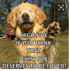 Cute funny animals, funny dogs, cute dogs and cats, i love dogs, Cute Funny Animals, Funny Animal Pictures, Dog Pictures, Funny Dogs, Dog Quotes, Animal Quotes, Animal Memes, Cute Puppies, Cute Dogs