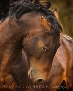 Intention- Wild Mustang Stallion, at Return to Freedom Sanctuary, Equine Greeting Cards. Most Beautiful Animals, Beautiful Horses, Beautiful Creatures, Cowgirl And Horse, Brown Horse, Majestic Horse, Wild Mustangs, All The Pretty Horses, Draft Horses