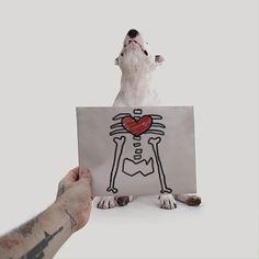 to completamente vacío y ver solo paredes blancas y a su fiel amigo Jimmy, decidió hacer una galería de fotos muy original, donde solo necesito a su Bull Terrier amado y las paredes blancas y vacías de su hogar.  Así que te dejamos por aquí las asombro