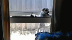 This dog who thinks this window is a door. | 23 Dogs Who Are Too Adorably Stupid For Their Own Good