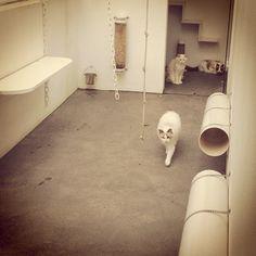 Salatino's Cattery #Salatino #ClubeSalatino #Gatil #love #Pets #Cute #lovepets #Siamese #Cattery #Ragdoll