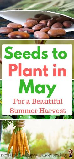 Seeds to Plant in May for a Beautiful Summer Harvest -  Zones 3 - 10. Your garden will be bursting with life.