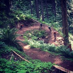 Oregon Adventures clients mountain biking Dead Mountain in Oakridge Oregon July 2015.