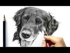 Drawing tutorial: How to draw realistic black fur - graphite and colored pencil by Leontine van vliet Graphite Drawings, Realistic Drawings, Love Drawings, Easy Drawings, Animal Drawings, Pencil Drawings, Beautiful Drawings, Pencil Art, Dog Drawing Tutorial