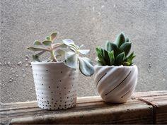 DIY - Como Plantar Suculentas - Vasinhos Personalizados - Senhora Bagunça DIY