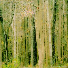 Woodland Forest Photograph Nature Woods by JKiesewetterPhotos - $20.00