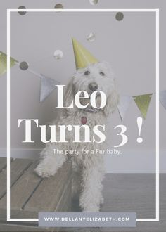 Dog Birthday Party for our puppy leo complete with pet photography photo shoot , dog cake and treats. - Dellany Elizabeth