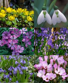 Collection S: Woodland Wonders   Discounted Collections   Flower Bulbs  Index Estimated Planting Area: · Bulb FlowersShade GardenZone ...