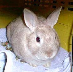 bunnies = cuteness